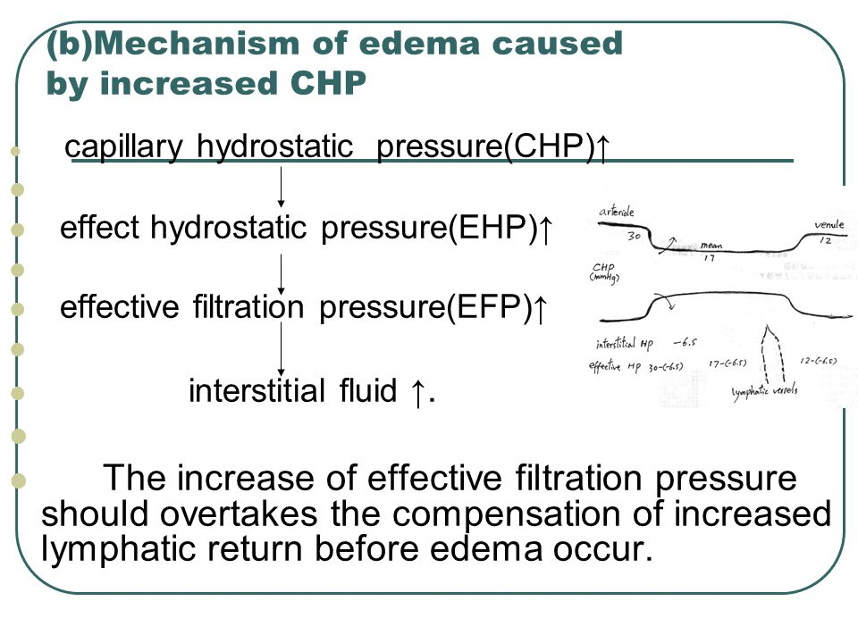 (b)Mechanism of edema caused by increased CHP