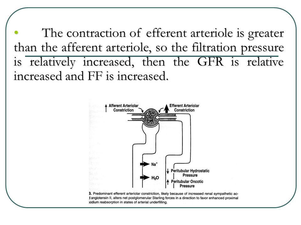 The contraction of efferent arteriole is greater than the afferent arteriole, so the filtration pressure is relatively increased, then the GFR is relative increased and FF is increased.