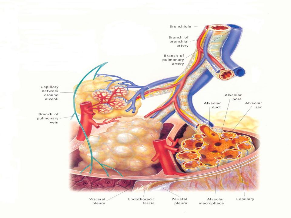 -Lymphatic insufficiency