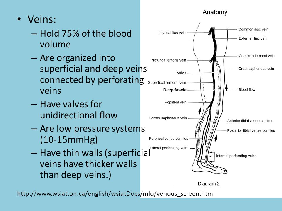Veins: Hold 75% of the blood volume