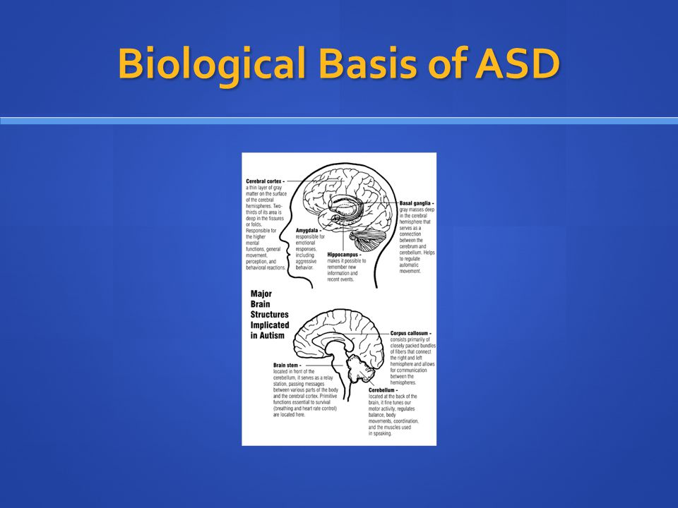 Biological Basis of ASD