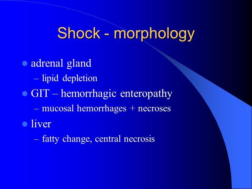 Shock - morphology adrenal gland GIT – hemorrhagic enteropathy liver