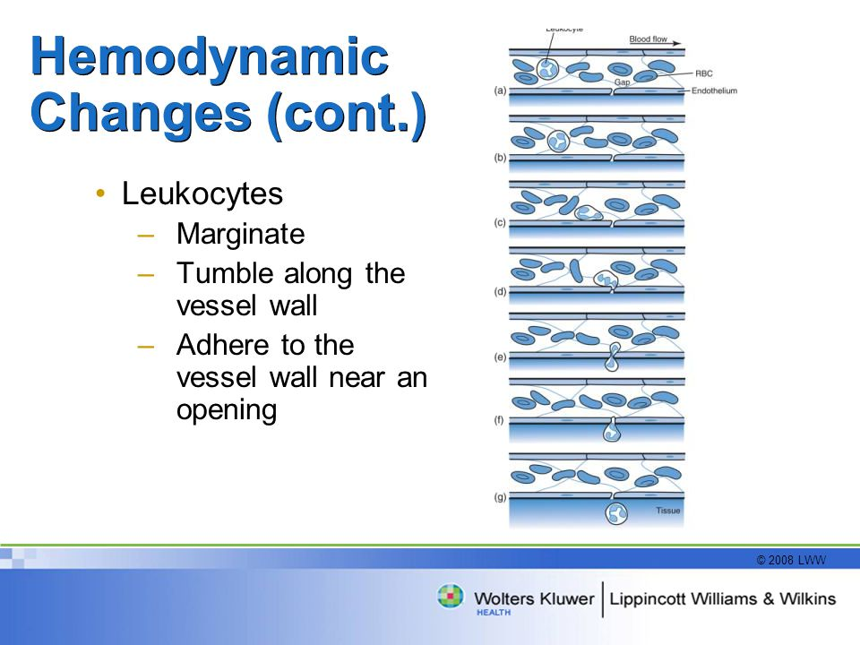 Hemodynamic Changes (cont.)