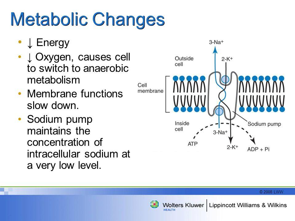 Metabolic Changes ↓ Energy