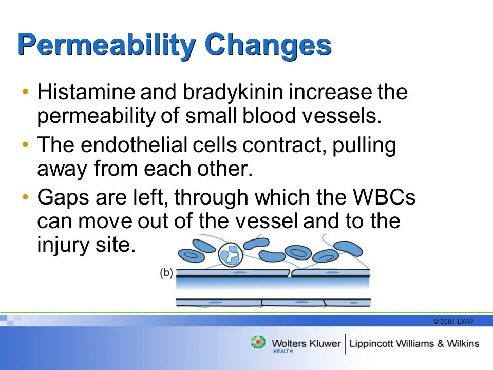 Permeability Changes Histamine and bradykinin increase the permeability of small blood vessels.