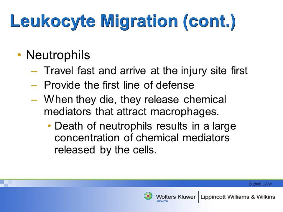Leukocyte Migration (cont.)