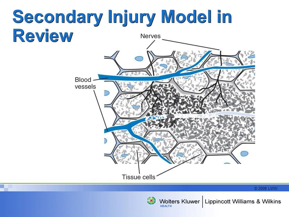 Secondary Injury Model in Review