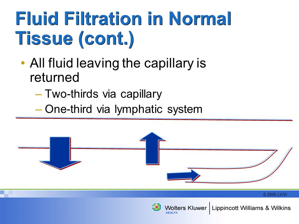 Fluid Filtration in Normal Tissue (cont.)