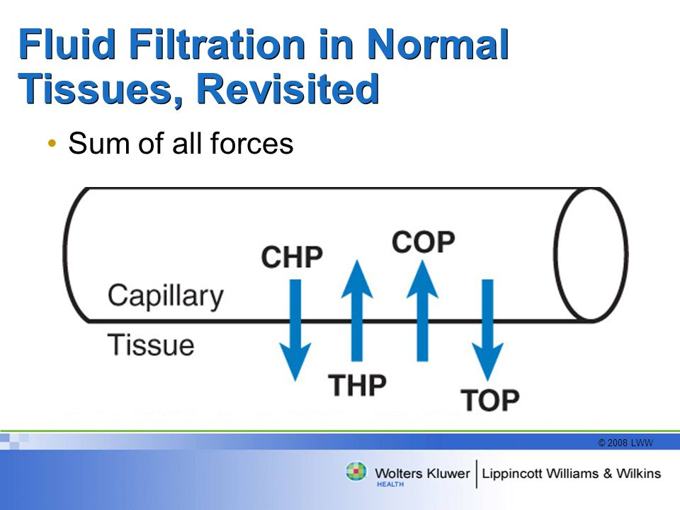 Fluid Filtration in Normal Tissues, Revisited