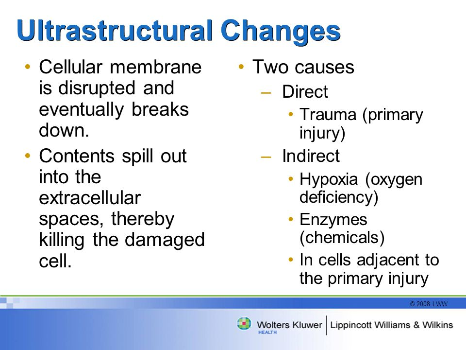 Ultrastructural Changes