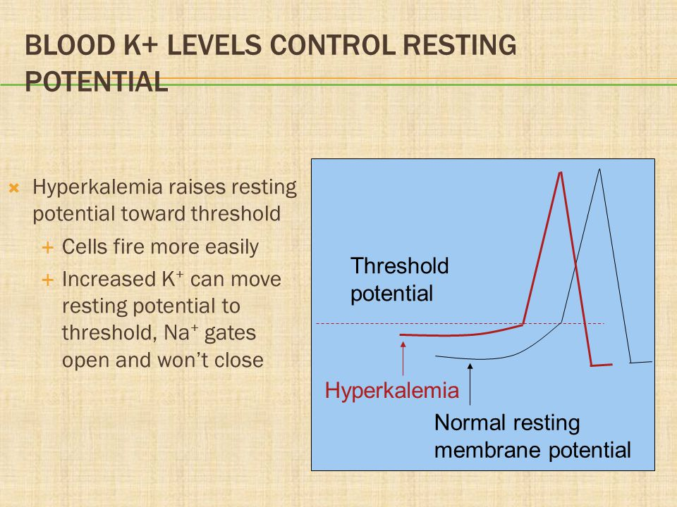 Blood K+ Levels Control Resting Potential