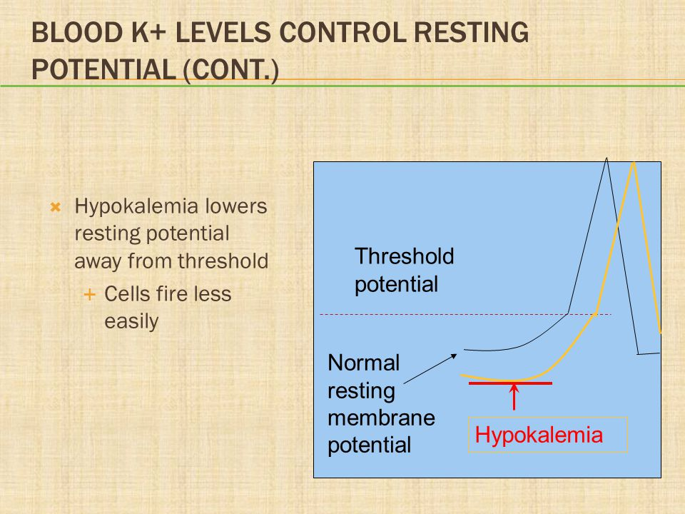 Blood K+ Levels Control Resting Potential (cont.)