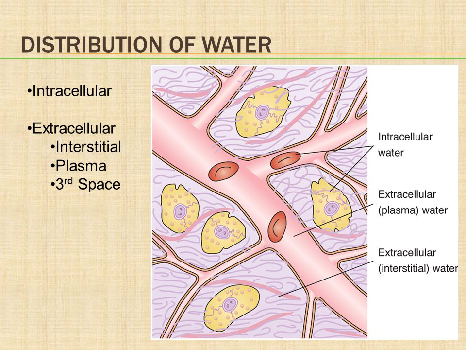 Distribution of Water Intracellular Extracellular Interstitial Plasma