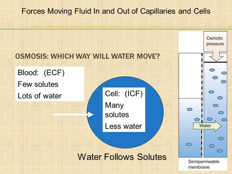 Osmosis: Which Way Will Water Move
