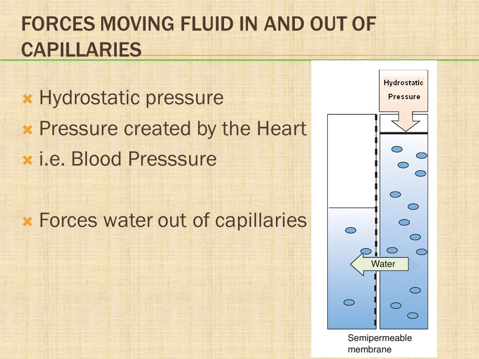Forces Moving Fluid In and Out of Capillaries