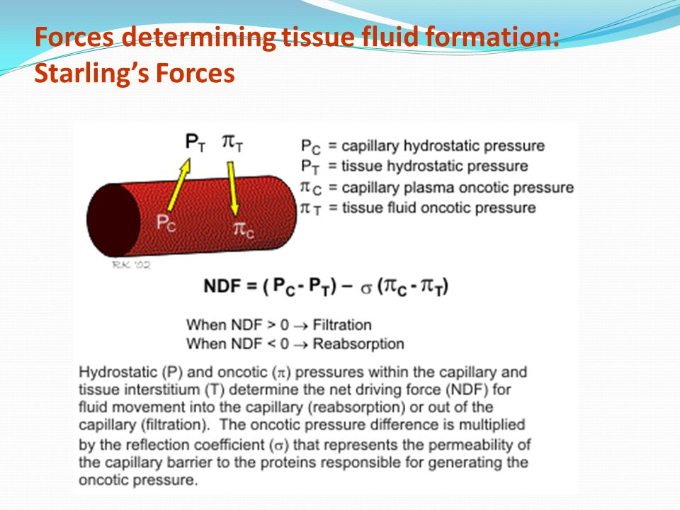 Forces determining tissue fluid formation: Starling's Forces