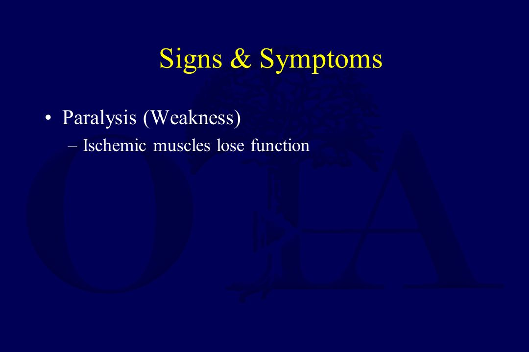 Signs & Symptoms Paralysis (Weakness) Ischemic muscles lose function