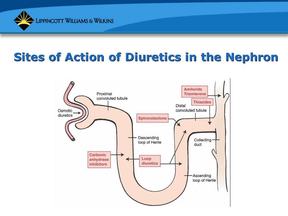 Sites of Action of Diuretics in the Nephron