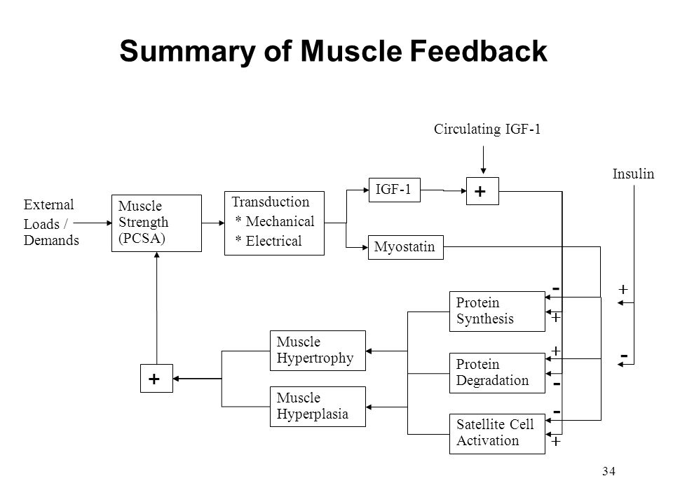 Summary of Muscle Feedback