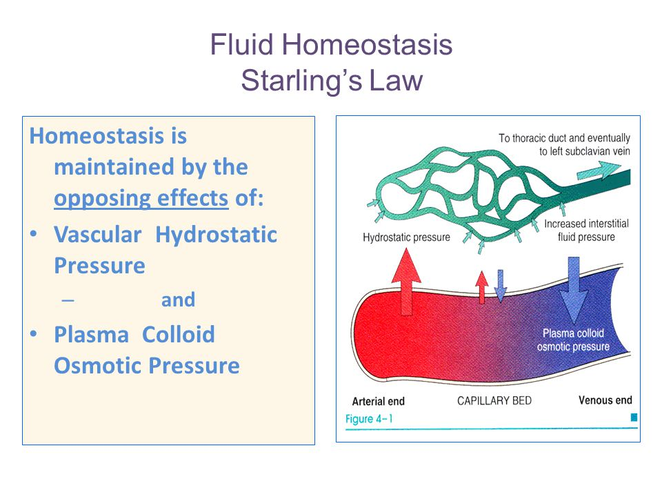 Fluid Homeostasis Starling's Law