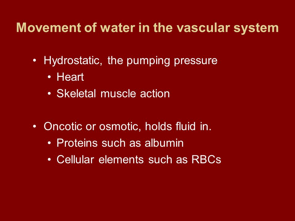 Movement of water in the vascular system