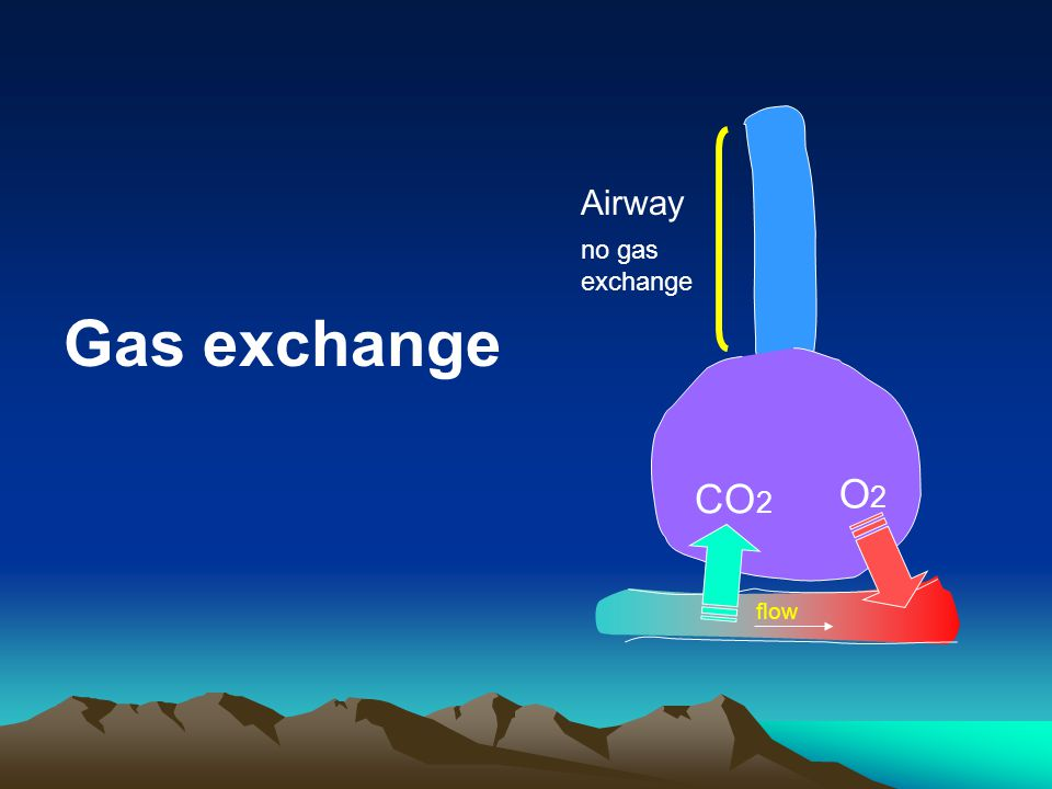 Airway flow CO2 O2 no gas exchange Gas exchange