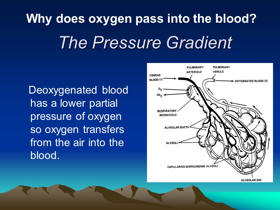 Why does oxygen pass into the blood
