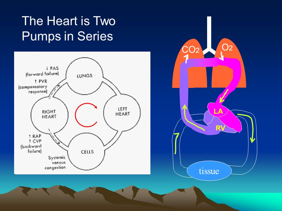 The Heart is Two Pumps in Series