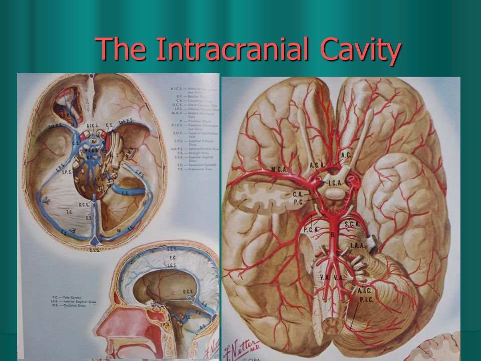 The Intracranial Cavity