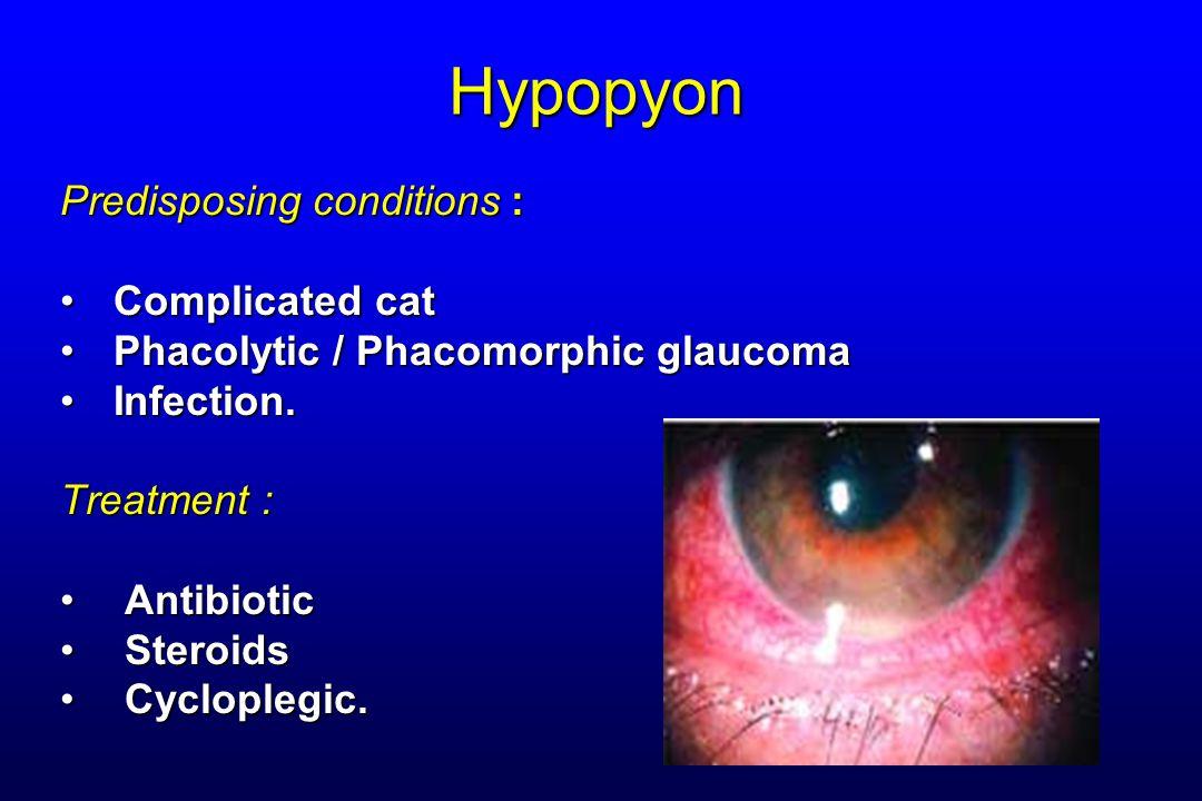 Hypopyon Predisposing conditions : Complicated cat