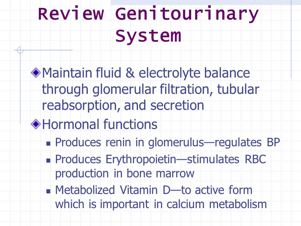 Review Genitourinary System