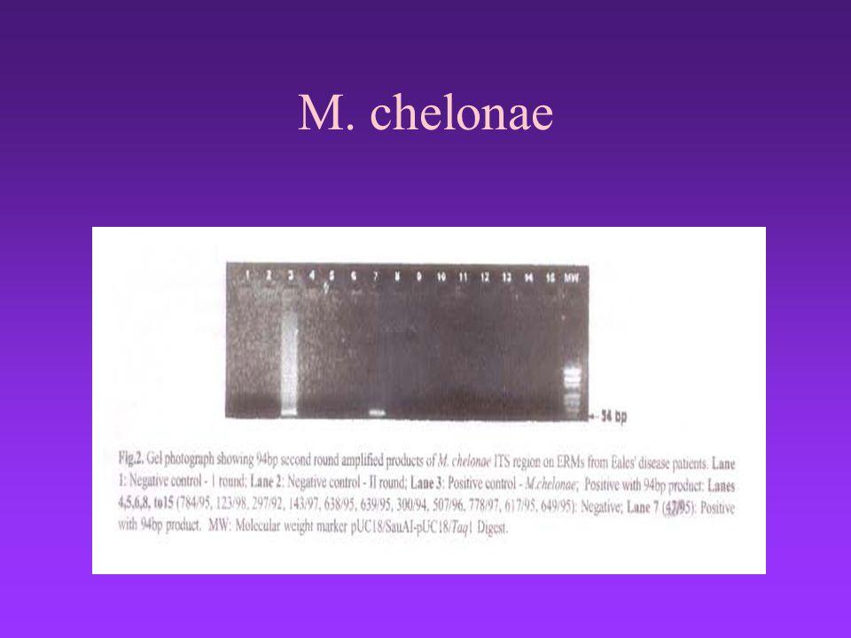M. chelonae