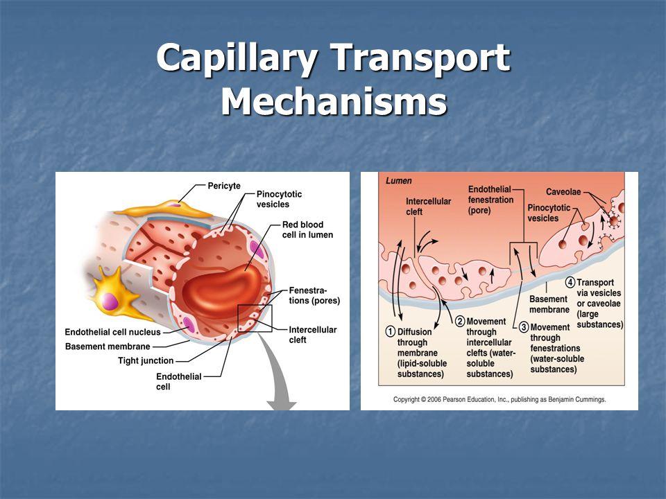 Capillary Transport Mechanisms