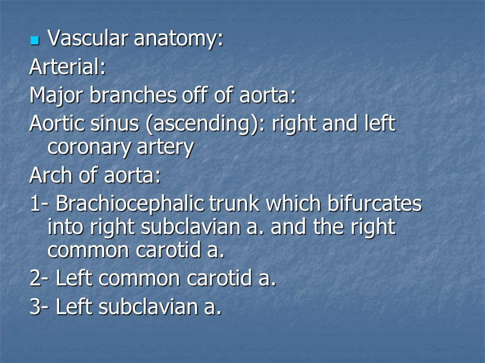Vascular anatomy: Arterial: Major branches off of aorta: Aortic sinus (ascending): right and left coronary artery.
