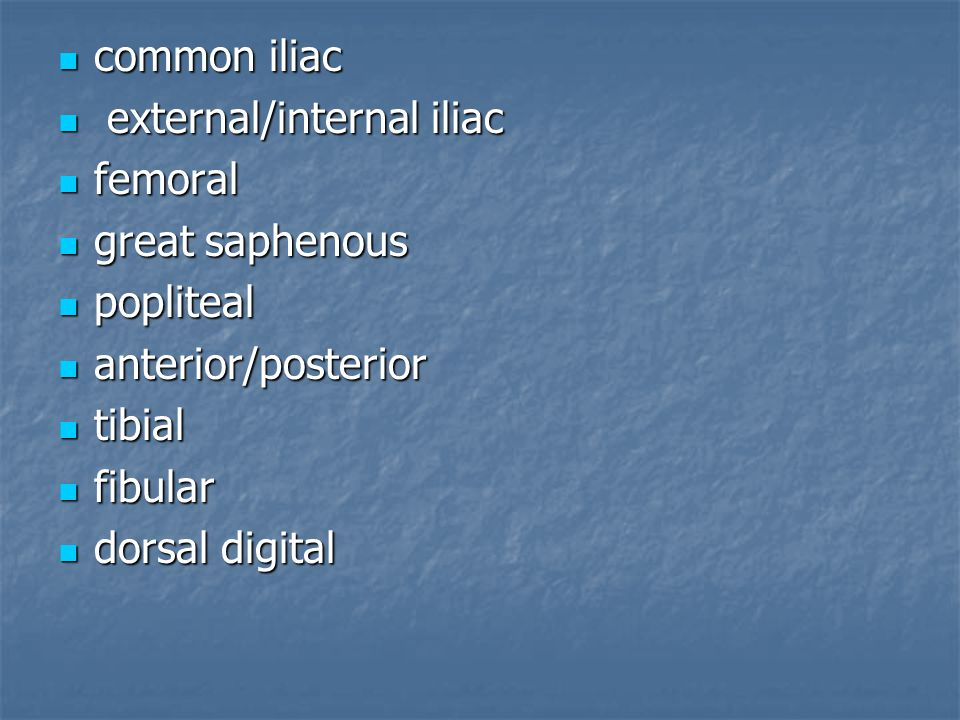 common iliac external/internal iliac. femoral. great saphenous. popliteal. anterior/posterior. tibial.
