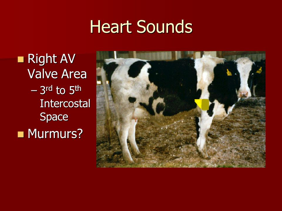 Heart Sounds Right AV Valve Area 3rd to 5th Intercostal Space Murmurs