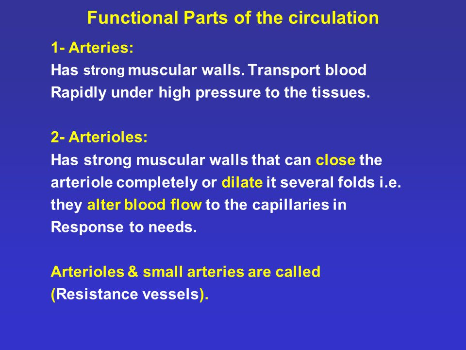 Functional Parts of the circulation