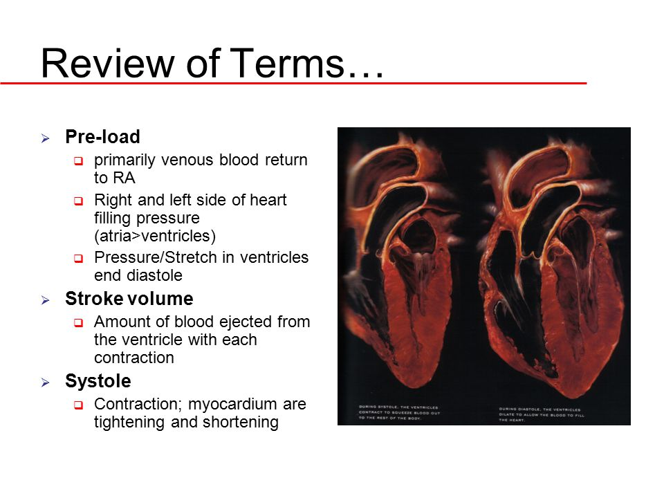 Review of Terms… Pre-load Stroke volume Systole