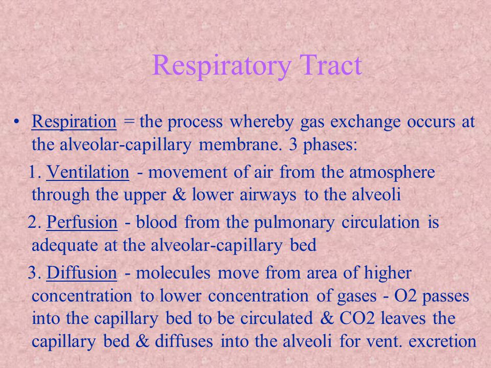 Respiratory Tract Respiration = the process whereby gas exchange occurs at the alveolar-capillary membrane. 3 phases: