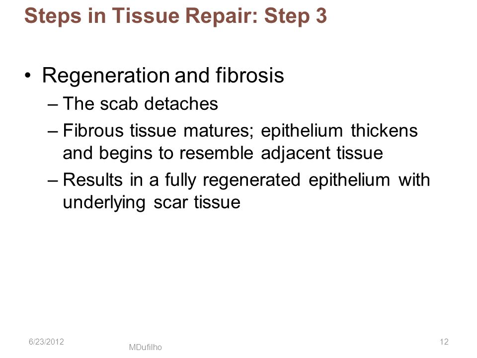 Steps in Tissue Repair: Step 3