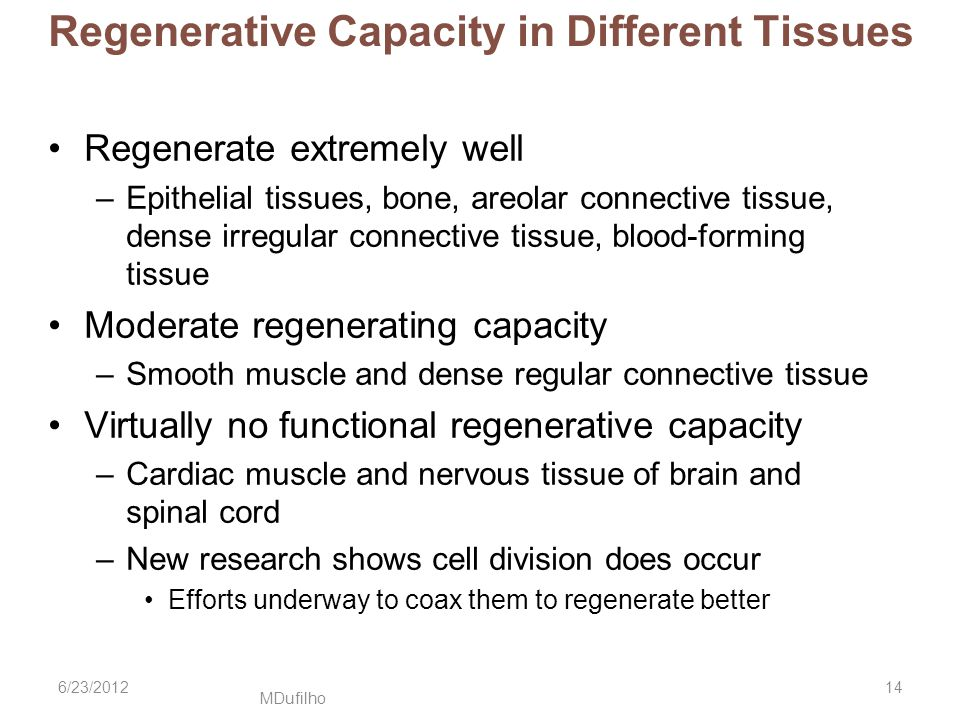 Regenerative Capacity in Different Tissues