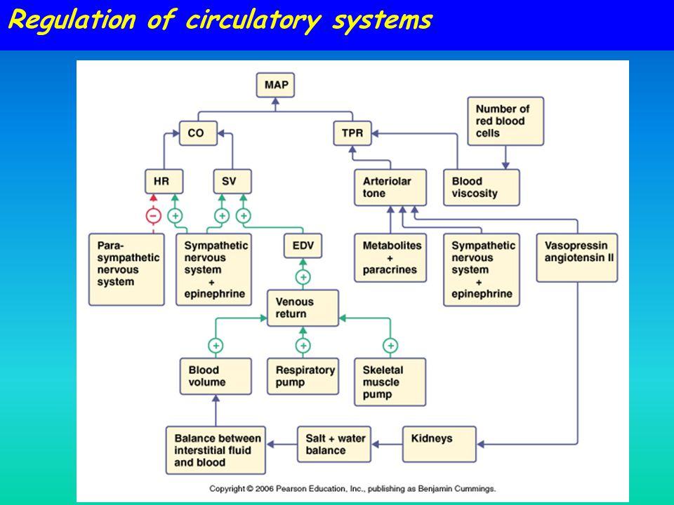 Regulation of circulatory systems