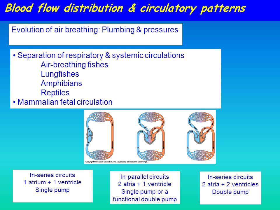 Blood flow distribution & circulatory patterns