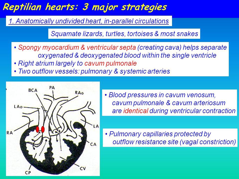 Reptilian hearts: 3 major strategies