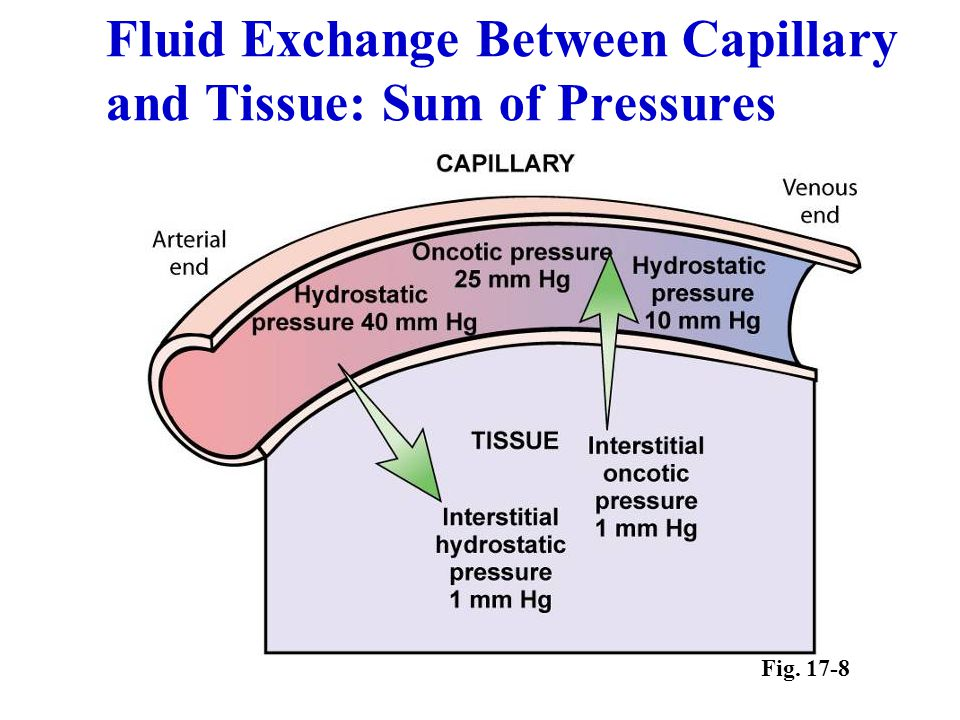 Fluid Exchange Between Capillary and Tissue: Sum of Pressures