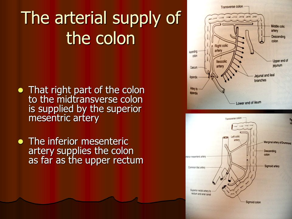 The arterial supply of the colon