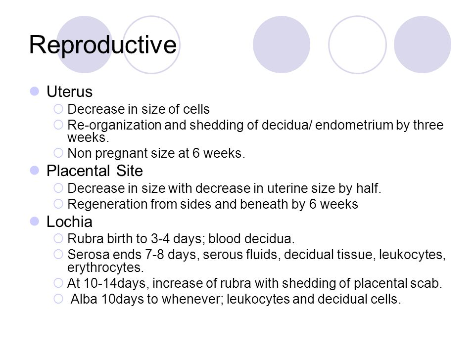 Reproductive Uterus Placental Site Lochia Decrease in size of cells