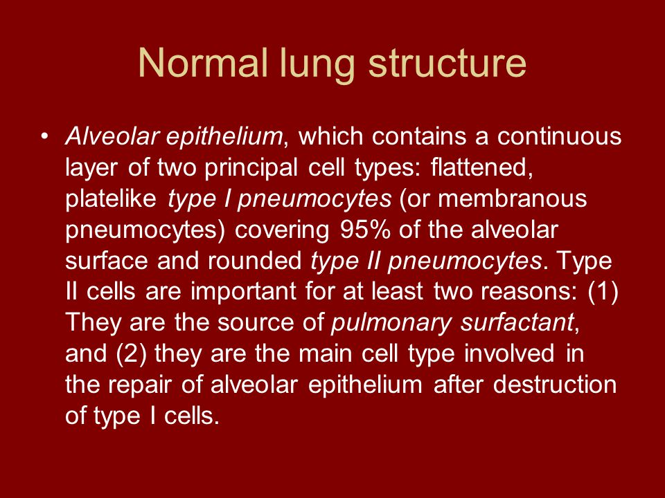 Normal lung structure