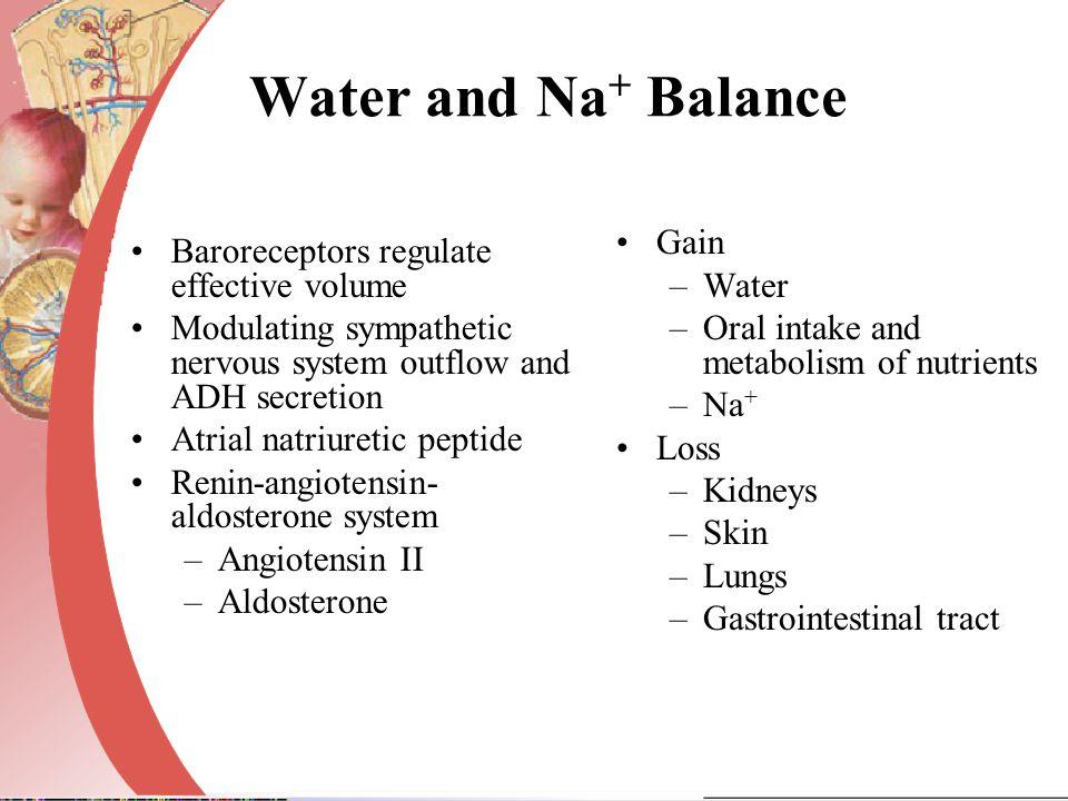 Water and Na+ Balance Gain Water
