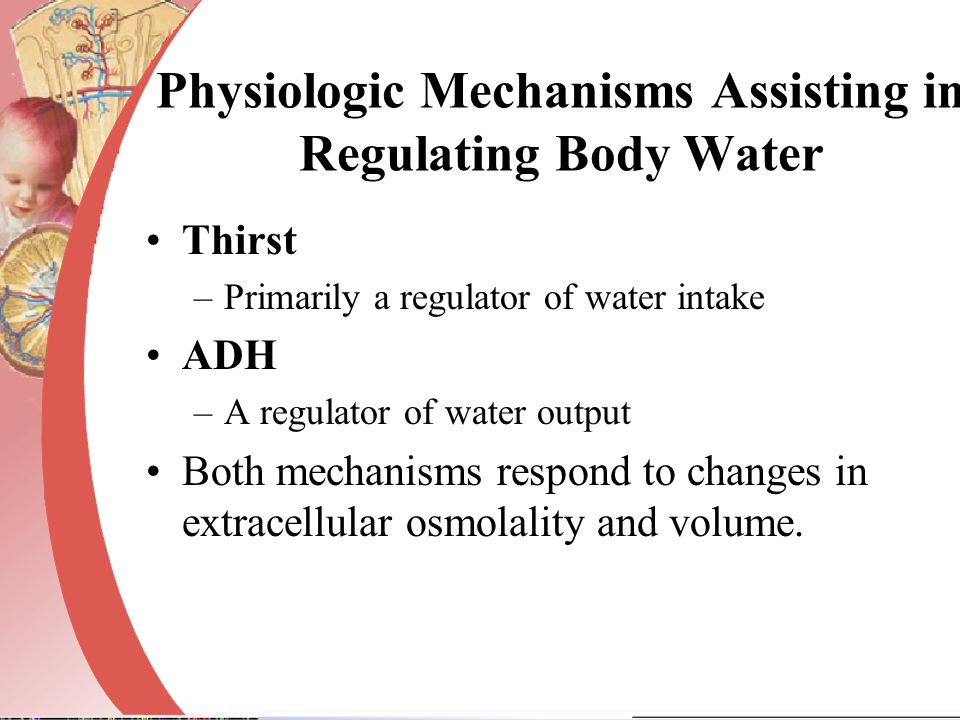 Physiologic Mechanisms Assisting in Regulating Body Water